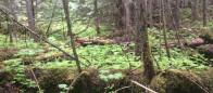 (#146) Catherine Creek