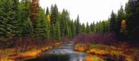 (#104) Gilnockie Creek