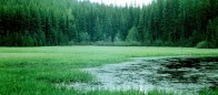 (#051) Brown Lake