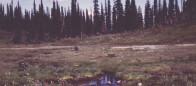 (#049) Kingfisher Creek