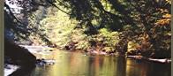 (#021) Skagit R. Forest