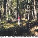Douglas fir--salal community.