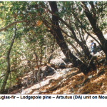 Douglas-fir--Lodgepole pine--Arbutus community