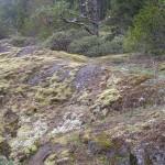 Biker tracks in moss