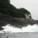 pine island surge