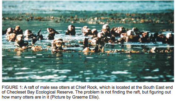 sea otters research paper