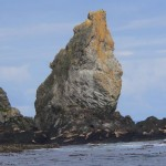 Steller sea lion haul out  Triangle Island is the largest sea lion colony in Canada in the second largest in the world.