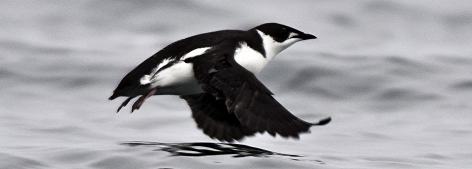 East Redonda Island Ecological Reserve