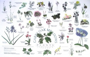 Garry Oak Meadows Placemat
