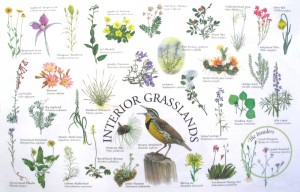 Interior BC Grasslands Placemat