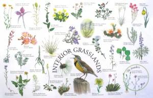 Interior BC Grasslands Placemat