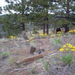 Trout creek vegetation
