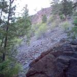 Hillside at Trout Creek