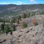 Slopes of Trout Creek