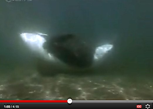 orca rubbing beach