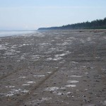 East shore Rose Spit looking back to Tow Hill ER