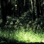 mycorhizal grass