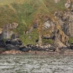 Shoreline of Solander Island. Note sea lions on rocks