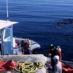 Dr.Anita Brinckmann-Voss waiting for specimens with our original dive-boat Ubatuba