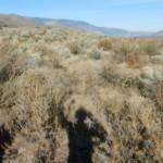 Sage bush and antelope brush