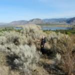 Giant Sage Brush