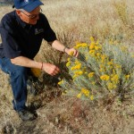 Garry and rabbitbrush