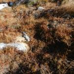 Alpine vegetation.