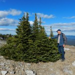 Garry beside stunted fir trees on the top edge of the reserve.