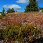 Vegetation in the alpine meadow