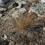 Grass clump.