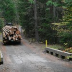 A load of logs coming down through the reserve. The logs are taken from areas in the watershed above the reserve..