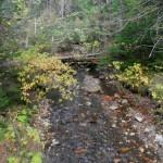 Vegetation along the creek