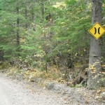 The road near the bridge is narrower than that allowed on forest access roads.