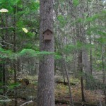 Someone likes building birdhouses in the reserve, an action not allowed in an ecological reserve.