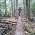 One of the many old growth logs fallen naturally in the reserve.