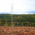 The treeline in the image shows the border of the Ecological reserve. The fact that clearcutting has been allowed here is incredibly shortsighted.