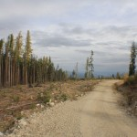 Logging has been done right to the edge of the reserve. The new Buck Hills Road.