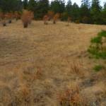 Grassland of the reserve.