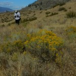 rabbit brush and view north