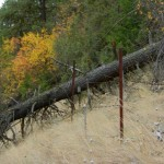 A tree fallen over the fence line can compromise the reserve.
