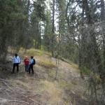 forestpath77