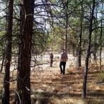 Ponderosa pine forest. photo by Niran Lella