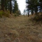 grassdraw