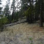 Part of the unique grassland forest transition.