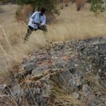 Lichen on rock.