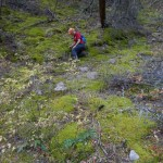 Linda examines moss in a shaded moist valley.