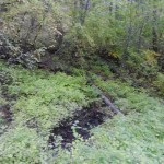 A small spring in the middle of the reserve.