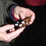 ER15 181 Strobilurus trullisatus