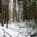 Winter in ER # 98.