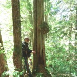 Hans and a large burl on a cedar